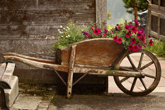 Old Wooden Wheelbarrow with Flowers royalty free stock images