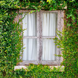 Old wooden window with ivy Royalty Free Stock Photography