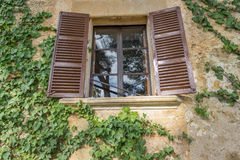 Old wooden window overgrown with ivy Royalty Free Stock Photography