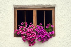 Old wooden window and purple flowers Stock Images