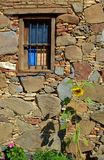 Old wooden window. With sunflower Royalty Free Stock Photos