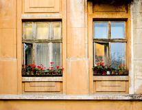 Old wooden windows frame on cement cracked wall Royalty Free Stock Photo