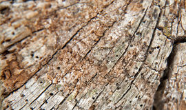 Old woodworm eaten timber texture Stock Image