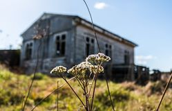 Old wool shed. An old wool shed in New Zealand Stock Images