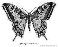 Old World Swallowtail Royalty Free Stock Image