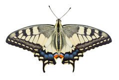 Old World Swallowtail (Papilio machaon) butterfly Stock Image