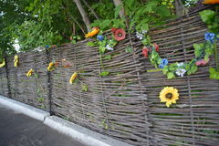 Old woven from willow branches, a fence with blooming sunflowers. Stock Image