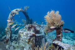 Old Wreck Reef Royalty Free Stock Photography