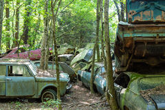 Old Wrecked Cars in Woods. Group of old wrecked and rusty cars in the forest Stock Image