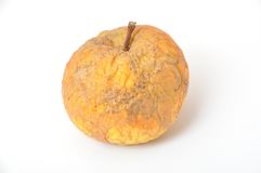 Old wrinkled apple Stock Photography
