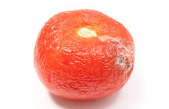 Old, wrinkled tomato with mold on white bacground Royalty Free Stock Image