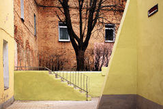 Old yard with tree and brick wall. Stock Photo