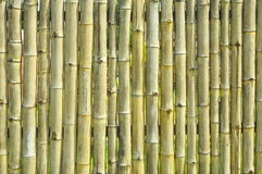 Old yellow bamboo wall texture background Royalty Free Stock Images