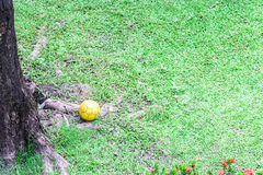 Old yellow football on grass near tree stub Stock Images