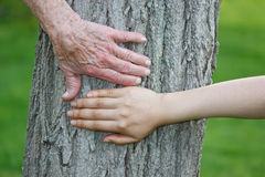 Old and Young Hands on Tree Trunk Stock Images