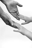 Old and young holding hands. On light background: black and white version Royalty Free Stock Photography