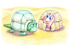 Old and young turtles illustration Royalty Free Stock Photo