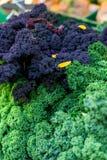 Oldenburg Kale Zdjęcia Royalty Free