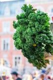 Oldenburg Kale Stock Photo