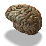 Older human brain Stock Images