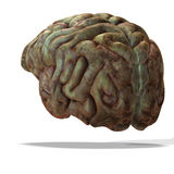 Older human brain Royalty Free Stock Images