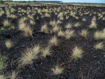 Older lava flow Maui Hawaii Royalty Free Stock Photography