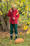 The older man cleans leaves with a rake Royalty Free Stock Photography