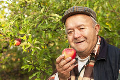 Older man in the orchard. Organic fruit Royalty Free Stock Photo