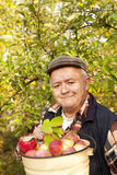 Older man picked apples Stock Images
