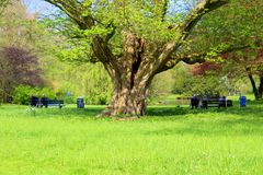 Older people in the park sitting on a wooden bench sunny day. Older people sitting on a wooden bench in the park relaxing and enjoying the first Sunny day in Royalty Free Stock Photo
