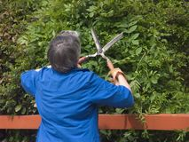 Older woman cuts foliage Stock Image