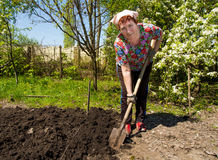 An older woman digging garden Stock Photography