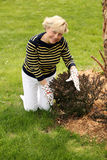 Older woman gardening Stock Photos