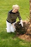 Older woman gardening. Older caucasian woman in gardening gloves smiling Stock Photos