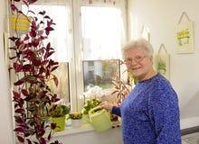 Older woman pours flowers Stock Photos