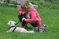 An older women bends down to check on her dogs at a park. Walking dogs is a great exercise for older people. stock photo