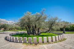 The oldest olive tree in Europe Stock Images
