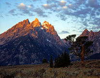 OldPatriarch#4. The Old Patriarch Tree in Grand Teton National Park, Wyoming Stock Photo