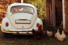 Oldtimer and chickens Royalty Free Stock Photos