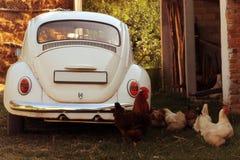 Oldtimer en kippen Royalty-vrije Stock Foto's