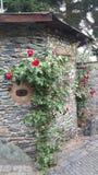 Oldtown玫瑰墙壁 库存图片