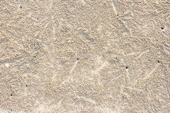 Ole of Ocypode ceratophthalma crab on a sandy. Footprints on horizontal landscape hole of Ocypode ceratophthalma crab on a sandy beach use for background Stock Photography