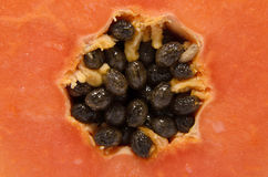 Ole papaya fruits Royalty Free Stock Image