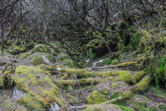 Ole skog Arkivfoton