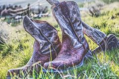 Ole workin cowboys. Beautiful, cool, amazing, stunning Royalty Free Stock Photo