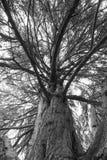 Ole zegaru drzewo obraz royalty free