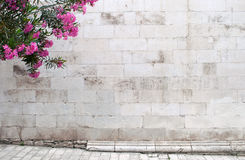 Oleander on empty stone wall background. Oleander flowers on empty background with medieval stone wall and paved street royalty free stock images