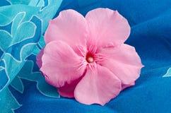 Oleander Stock Image