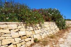 Oleander flowers on old stone fence near road on Malta. Island Royalty Free Stock Photo