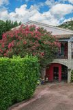 Oleander full of flowers in front of a house in the village Sain. T Montan in the Ardeche region of France Royalty Free Stock Image